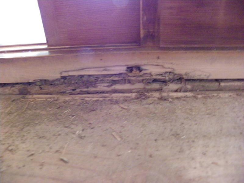 ヤマトシロアリの敷居被害写真
